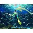 池袋 サンシャイン水族館  天空の水族館