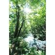 ♦︎奥入瀬渓流(青森県) 太陽に照らされた葉っぱたちが渓流の流れとともにキラキラと輝いていました!