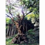 2018.8.26 佐賀県武雄市 武雄の大楠