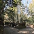 竹林の小径 嵐山 京都 [2018 Feb.]  #kyoto #Japan #tourism
