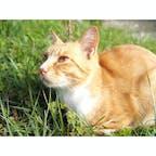尾道のネコは人懐っこくてすぐ膝の上乗ってくれる。 癒しでしかない😇