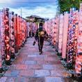 京都、四条河原の寺町美人さんで2500円で浴衣の着付けとレンタルをしていただいて、嵐山まで600円のバスフリー切符で遠出✨