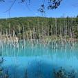 #美瑛#北海道#青い池#9月 感動した
