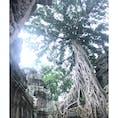巨大すぎるガジュマルの樹が印象的なタ・プローム! アンジェリーナジョリーも映画の撮影で訪れたとか♩