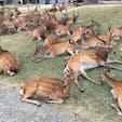 鹿がいっぱい!