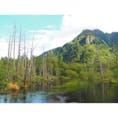 🇯🇵長野県 上高地 水がとってもきれい!