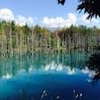 青い池 ❁︎ in美瑛