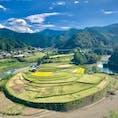 あらぎ島@和歌山です。 稲刈りの途中でしょうか? 黄色と緑のパッチワークの完成です😀