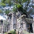カンボジア ベンメリア ♡ラピュタのモデル? 遺跡に登ったり触ったりできました カンボジアで一番おすすめかも♡