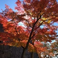 岩手公園の紅葉です🍁わかりにくいですがバックの石垣も綺麗です