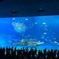 沖縄 美ら海水族館 噂通り素敵な場所でした!