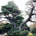兼六園、木に詳しくなくても凄さを感じる!