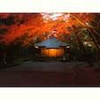 明日までの中尊寺、紅葉ライトアップ。 日が落ちてからの景色は幻想的で、とても素敵でした。