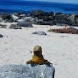 ガラパゴス諸島クルーズ