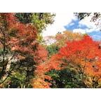 《高尾山/東京》 見頃を迎えた高尾山の紅葉。 たくさんの観光客でリフトは 行き40分、帰り50分待ちでした、、  奥高尾の入り口、紅葉茶屋で山菜そばとおでんを食べました😋