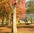#奈良公園#しか#鹿 #土日の鹿はお腹がいっぱい