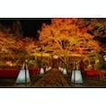 神蔵寺の紅葉ライトアップ