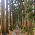 2018年11月 戸隠神社奥社に続く杉並木