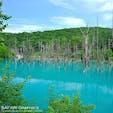 世界中から観光客が訪れている北海道美瑛町の青い池。水没したカラマツや白樺の立ち枯れた様子と、自然界ではあまり見られないミルキーブルーの対比が絶妙です。雪が降り積もる真冬には青くライトアップされ、真っ白な雪とのコントラストがとても綺麗です!