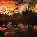 池に映る紅葉がとても幻想的でした🍁#紅葉 #ライトアップ #松島 #宮城 #円通院