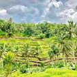 indonesia🇮🇩bali  ウブドの棚田。海のイメージが強いバリ島でのこの風景は、新鮮に感じました😊