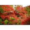 秋の京都:毘沙門堂