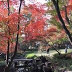 20181126*大田黒公園の紅葉