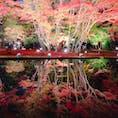 曽木公園の逆さもみじ🍁 写真で見た綺麗さにちょっと疑いを持ってたけど笑 実際も本当に綺麗だった!!