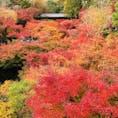 京都 東福寺の通天橋からのもみじです。 あたり一面に広がる紅葉の臨場感は写真では伝えきれません😆