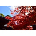 そうだ、京都へ行こう! #東福寺#京都
