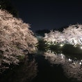2018.4 青森 弘前城にて。 桜は咲き始めたところでしたが、綺麗でした。満開の季節にまた行きたいところです。
