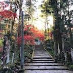 11月月末の大雄山最乗寺にて。 お寺へあがる途中の石段の紅葉がとてもきれいでした。