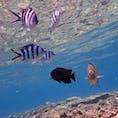 沖縄 青の洞窟 亜熱帯の海はダイビングに最高でした。