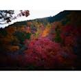 京都の嵐山からみた紅葉! いろんな色が映えていて素敵でした(*ˊ ˋ*)