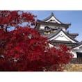 【滋賀】 彦根城 × 紅葉🍁