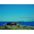 海と亀と竜宮城。 城崎マリンワールドで見つけた景色です