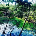 メキシコ・ユカタン半島 プラヤデルカルメン近郊にあるエル エデンセノーテ。水が信じられないくらい澄んでいます。
