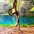 [2018/12] 山形県、丸池様。 山形県唯一と言われる湧水スポット。 水が非常に綺麗なため、池の中の倒木がなかなか腐らず、龍のように見えることから信仰を集めているとか。 水は透明な青色で、なんだか神秘的です。 周囲は本当に何もなく、誰もいない林の中でコンコンと水が湧いていると思うと、ロマンがありますよねー。  本当はもっと近寄って写真を撮りたかったのですが、柵の向こうは神域と書かれており、入ることができませんでした。残念。