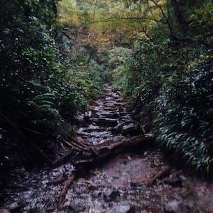 高尾山の登り道