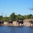 ボツワナ🇧🇼 チョベ国立公園のボートサファリ🚤 象の行進が見れた時は感激でした #チョベ国立公園