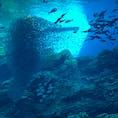 仙台うみの杜水族館🐬 大きな水槽やイルカショー、ペンギンなどなど想像していたよりも楽しめました!