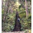 奥多摩 愛宕神社  延々と続く急階段。 先が見えない笑