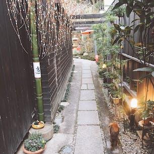 成田山帰りの三芳屋 看板犬ベリーちゃん放浪中(ˊo̴̶̷̤⌄o̴̶̷̤ˋ)