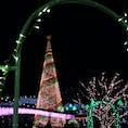 栃木県足利市 #あしかがフラワーパーク #イルミネーション#クリスマスツリー