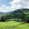 Feb.2019 キャメロンハイランド 春節休暇で行ってきました。 常夏のマレーシアの中で高原なので過ごしやすい場所です。KLからも行きやすいです。 紅茶が有名で、山の斜面を利用した茶畑がとても素敵な眺めでした。