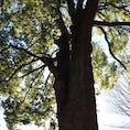 群馬県太田市 #自然#散策#綺麗#植物#木#花