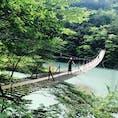 夢の吊り橋🌱🍃🌿