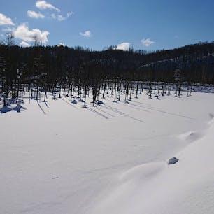 #冬の青い池 #美瑛 #北海道