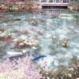 岐阜。モネの池。
