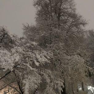 井の頭公園の雪景色。